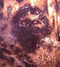 Juan de Esquivel, Conquistador de Jamaica:
